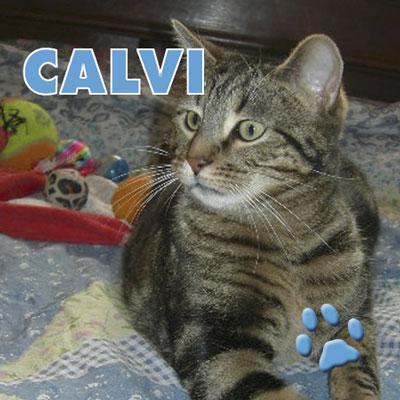 affiche_calvi