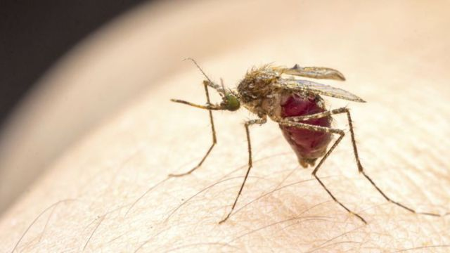 comment-soigner-les-demangeaisons-des-piqures-de-moustique_4943583